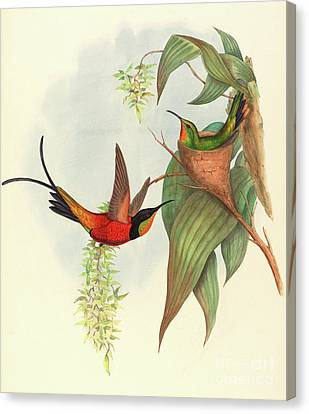 Fairy Topaz Canvas Print by John Gould