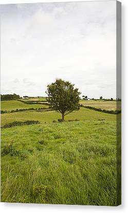 Fairy Tree In Ireland Canvas Print by Ian Middleton
