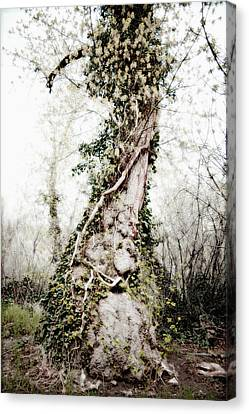 Fairy Tree Canvas Print by Todd and Ashleigh Madsen