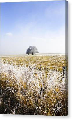 Canvas Print featuring the photograph Fairytale Winter In Fingal by Jorgo Photography - Wall Art Gallery