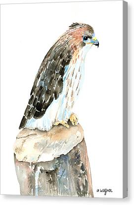 Falcon Canvas Print by Arline Wagner