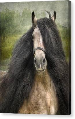 Horse Artwork Canvas Print - Falcon by Fran J Scott