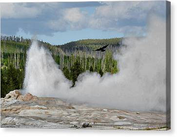 Falcon Over Old Faithful - Geyser Yellowstone National Park Wy Usa Canvas Print by Christine Till