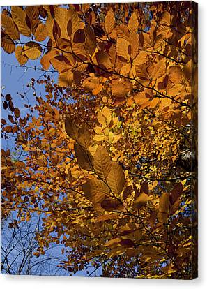 Fall 2010 51 Canvas Print by Robert Ullmann