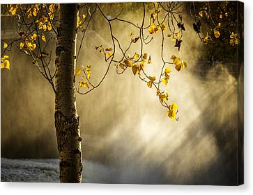 Fall And Fog Canvas Print by Celso Bressan