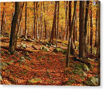 Canvas Print - Fall At In Ny by Raymond Salani III
