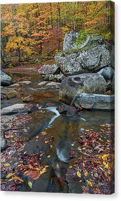 Fall At Richland Creek  Canvas Print by Damon Shaw