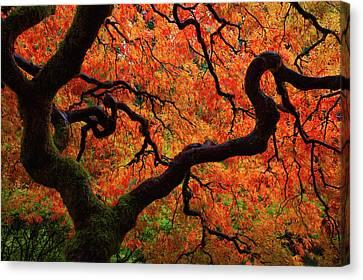 Maple Season Canvas Print - Fall Chaos by Darren White