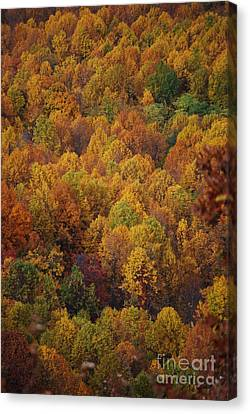 Fall Cluster Canvas Print by Eric Liller