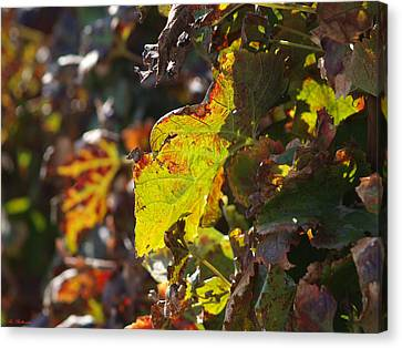 Canvas Print featuring the photograph Fall Color 1 by Arik Baltinester