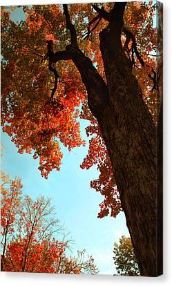 Fall Color 2010 No 3 Canvas Print