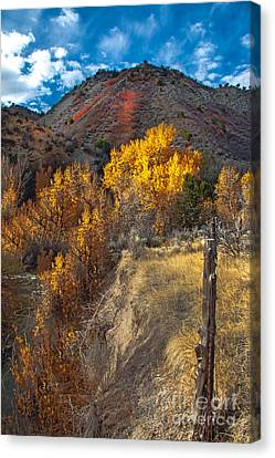 Fall Color Along Fence Line Canvas Print by Robert Bales