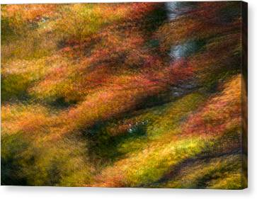 Canvas Print featuring the photograph Fall Color Impressions by Kevin Blackburn