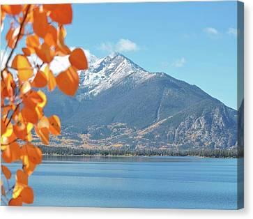 Fall Color In The Rockies Canvas Print by Connor Beekman
