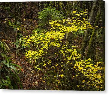 Fall Color Canvas Print by Jean Noren