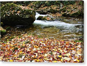 Fall Color Rushing Stream Canvas Print by Thomas R Fletcher