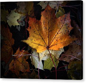 Fall Color Series II Canvas Print by Joanne Coyle