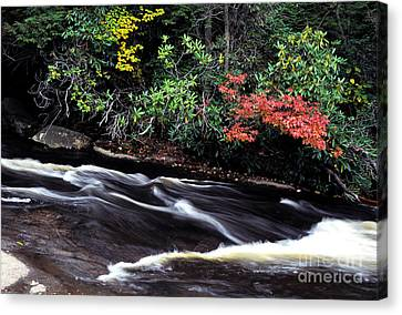 Fall Color Swallow Falls State Park Canvas Print by Thomas R Fletcher