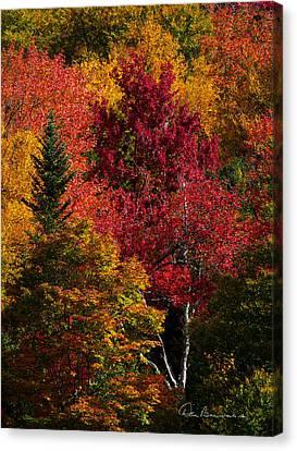 Fall Colors 8743 Canvas Print by Dan Beauvais