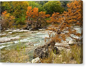 Fall Colors Along The Pedernales River Canvas Print by Mark Weaver