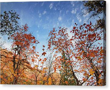 Fall Colors Along West Fork Trail Canvas Print