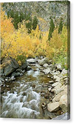 Fall Colors And Rushing Stream - Eastern Sierra California Canvas Print by Ram Vasudev