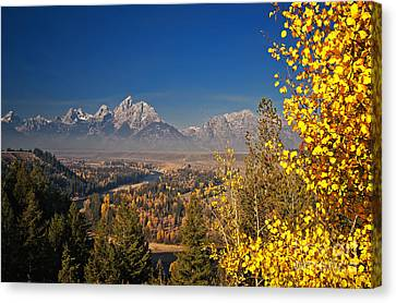 Fall Colors At The Snake River Overlook Canvas Print by Sam Antonio Photography