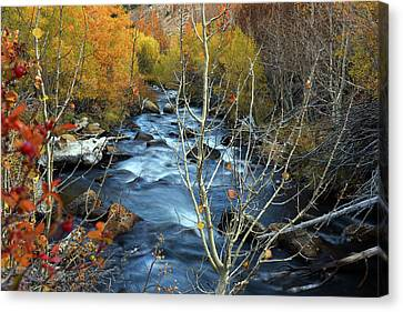 Canvas Print featuring the photograph Fall Colors Bishop Creek by Dung Ma