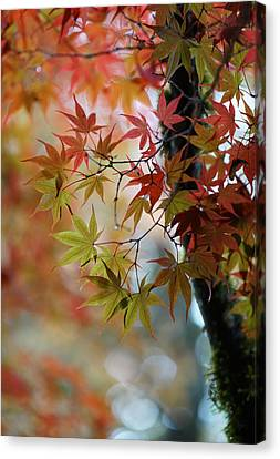 Fall Colors Display Canvas Print by Mike Reid