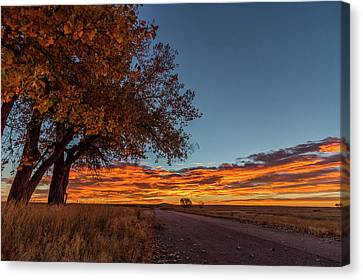Fall Colors Illuminated By A Glorious Sunrise Canvas Print