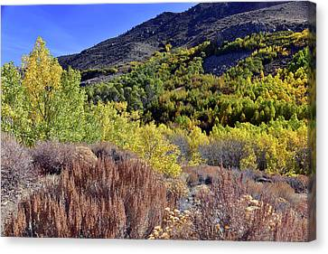 Fall Colors In Bishop Creek  Canvas Print by Dung Ma