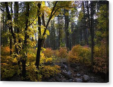 The Magical Fall Colors  Canvas Print by Saija  Lehtonen