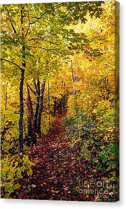 Fall Colors Oberg Mountain North Shore Minnesota Canvas Print