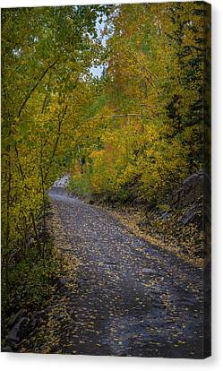 Fall Colors On Engineer Pass Canvas Print by Michael J Bauer