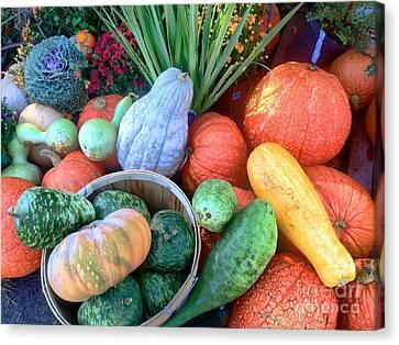 Fall Colors Pumpkins And Gords 1 Canvas Print