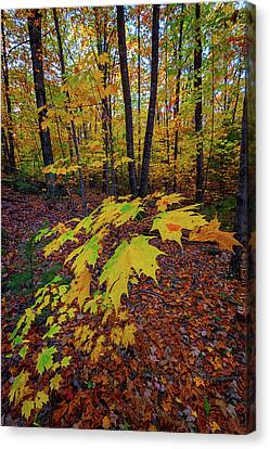 Maine Mountains Canvas Print - Fall Colors by Rick Berk