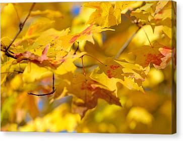 Autumn Leaf Canvas Print - Fall Colors by Sebastian Musial