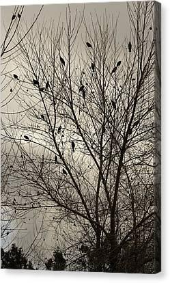 Fall. Evening.blackbirds. Canvas Print by Viktor Savchenko