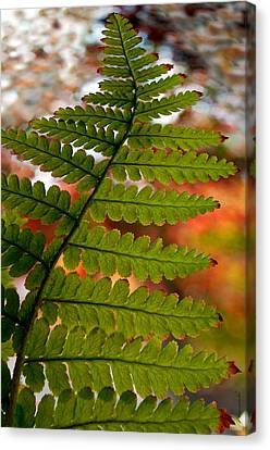 Fall Fern Canvas Print by Gwyn Newcombe