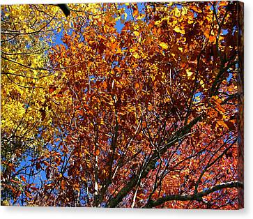 Fall Canvas Print by Flavia Westerwelle