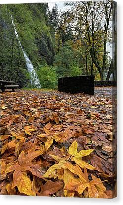 Fall Foliage At Horsetail Falls Canvas Print by David Gn