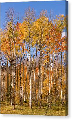 Fall Foliage Color Vertical Image Canvas Print