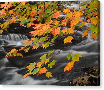 Fall Foliage In Acadia National Park  Canvas Print by Juergen Roth