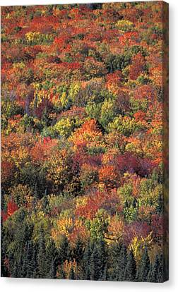 Fall Foliage In New Hampshires White Canvas Print by Richard Nowitz