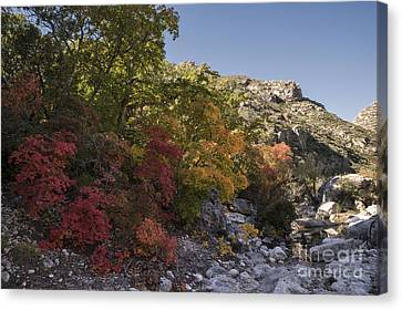 Fall Foliage In The Guadalupes Canvas Print by Melany Sarafis