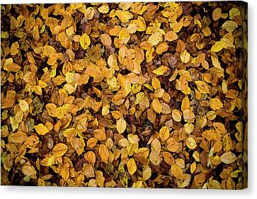 Brown Tones Canvas Print - Fall Foliage Nature Pattern by Frank Tschakert