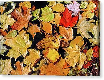 Fallen Leaf On Water Canvas Print - Fall Foliage On Water by Morris Finkelstein