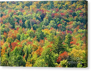 Fall Forest Canvas Print by David Lee Thompson