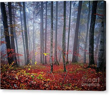 Canvas Print featuring the photograph Fall Forest In Fog by Elena Elisseeva