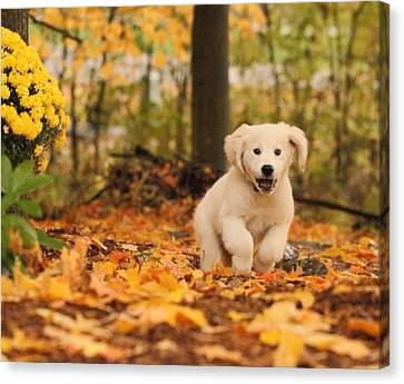 Fall Frolic  Canvas Print by Coby Cooper